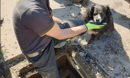 Cane in un tombino, i Vigili del Fuoco salvano la bestiola intrappolata nella fognatura