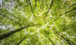 La Provincia dona alberi agli studenti