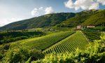 Colline Prosecco e Valdobbiadene, sito Unesco: nominato il comitato scientifico