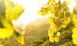 """Colline del Conegliano Valdobbiadene, da domani """"Bio Experience"""" con Perlage Winery"""