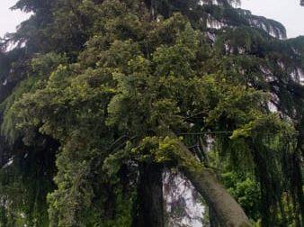 L'albero rischia di crollare sulla scuola