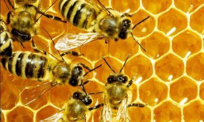 Asolo aderisce alla giornata mondiale delle api