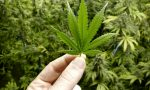 Cannabis light: arriva il divieto dalla Cassazione