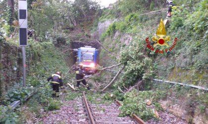Treno Treviso-Belluno bloccato da un albero