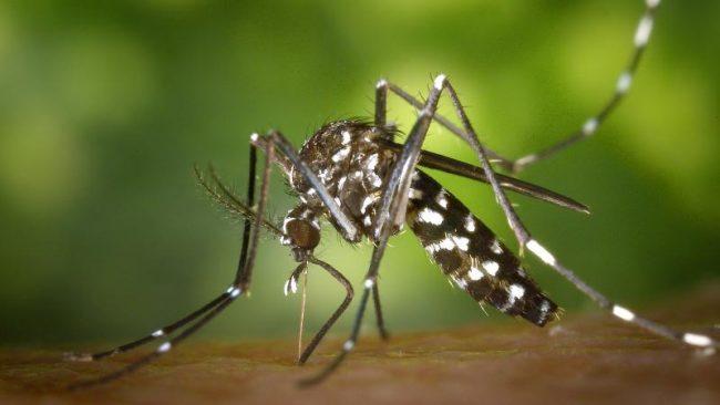 In Veneto crollati i casi di West Nile Virus