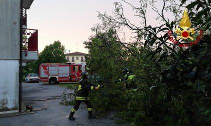 Maltempo nella Marca, alberi caduti e pali pericolanti: ecco dove