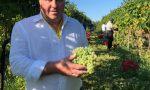 Coldiretti Treviso onora la prima vendemmia sulle Colline Unesco