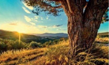 """""""L'albero, linfa di vita del nostro territorio"""": da oggi a San Zenone 68 artisti in mostra"""
