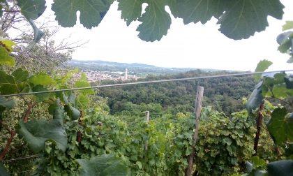 Le colline del Prosecco di Conegliano Valdobbiadene celebrano il patrimonio Unesco con il territorio
