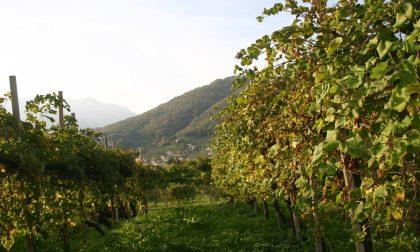 Asta di Vini del Montello a favore del centro Covid