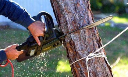 Abbattimento alberi a Montebelluna: da lunedì tocca a viale XXX Aprile