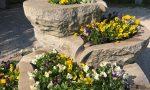 """""""Il Tuo Comune rifiorisce"""": un po' di primavera e speranza a Pederobba – FOTO"""