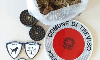 Polizia locale Treviso, droga nascosta nel cestino: phone center segnalato alla Questura