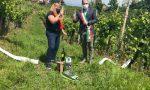 """""""E' Verdiso"""": inaugurazione virtuale per la Mostra dei vini"""