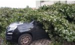 """Albero sfonda l'auto di un residente ma il Comune non paga: """"Colpa della natura…"""""""