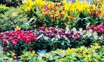 Giardini Fioriti, il concorso: in palio buoni acquisto negli esercizi commerciali di Altivole
