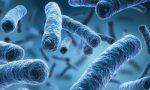 Rischio batteri nel salmone: prodotto ritirato dal supermercato di Arcade