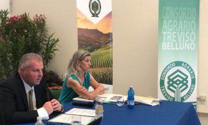 Consorzio agrario di Treviso e Belluno, il bilancio 2019 supera i 100 milioni di euro