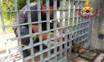 Castelfranco, cagnolino incastrato nel cancello, lo liberano i Vigili del fuoco