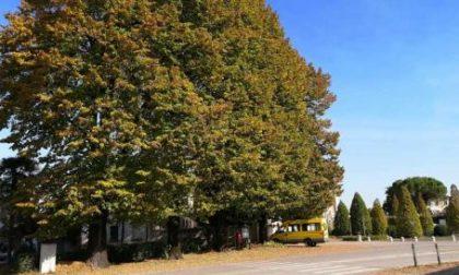 Breda di Piave distribuisce alberi ai cittadini per ridare il sorriso alla Pianura Padana