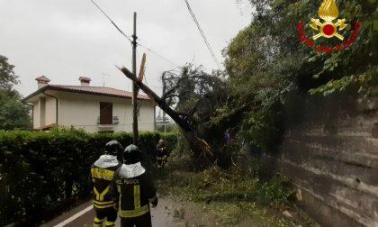 Piogge intense nella Marca, diversi interventi dei Vigili del fuoco per taglio e rimozione di alberi – FOTO