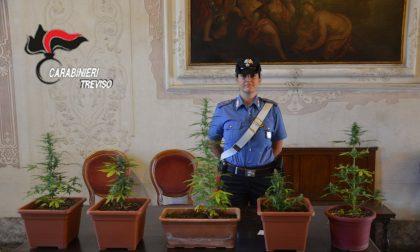 Carabinieri di Treviso: sequestrati quasi 5 chili di droga!