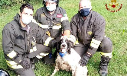 Cane precipita in una scarpata a Susegana, salvato dai Vigili del fuoco