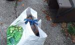 """Lotta ai """"furbetti"""" dei rifiuti a Treviso, multa da 400 euro a un cittadino in via Fagarè"""