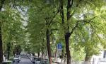 Modifiche alla viabilità a Montebelluna: iniziano le potature di 141 tigli