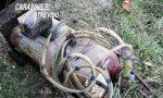 Bombole per assalti ai bancomat nascosti in un pozzetto della rete elettrica