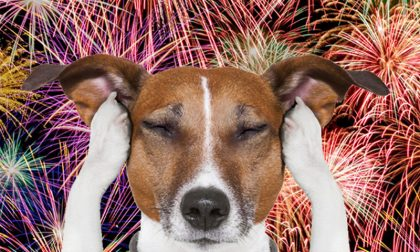 Il decalogo per proteggere cani e gatti dai botti di Capodanno