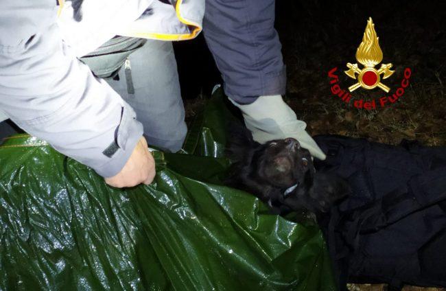 Scilla finisce in un dirupo tra i rovi, salvata dai Vigili del fuoco: era sparita da una settimana