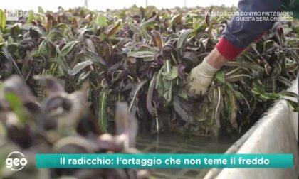 Geo&Geo, puntata dedicata al pregiato Radicchio Rosso di Treviso