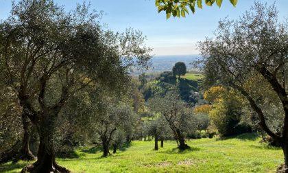 """""""Ramoscello d'Oro 2021"""": protagonista l'Olio Extra Vergine del Veneto e non solo"""