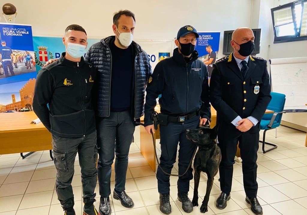 Ecco Luke, il nuovo cane antidroga della Polizia locale di Treviso