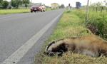 """Centro di Custodia della Fauna Selvatica, la Provincia: """"Rimane attivo"""""""