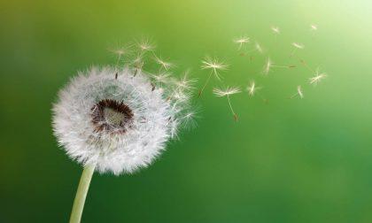 Pollini e spore fungine: riparte il monitoraggio in Veneto