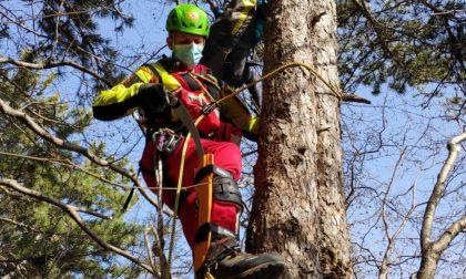 Il volo col parapendio finisce subito: 27enne precipita e resta incastrata tra gli alberi