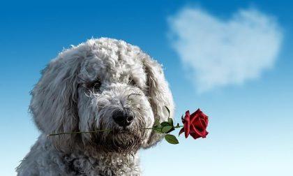 Auguri San Valentino 2021, le frasi più belle e romantiche da inviare via Whatsapp