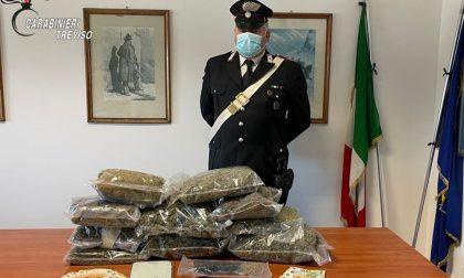 """Giovani insospettabili, ma erano i """"boss"""" dello spaccio di marijuana nel Solighese"""