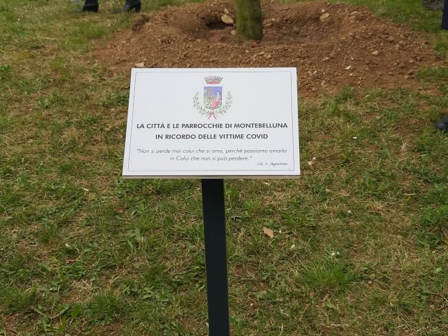 Di fronte al Duomo di Montebelluna, un ulivo in ricordo delle vittime del Covid-19