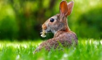 Meteo Pasqua e Pasquetta in Veneto: più freschetto, ma in prevalenza soleggiato
