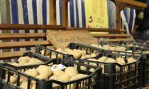 La patata di Pagnano diventa De.Co.