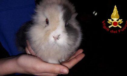 Ma guardate dov'era andato a infilarsi il tenero coniglio nano!