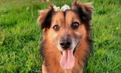 """Ha appena perso il papà e ora gli hanno ucciso anche l'adorato cagnolino. Zaia: """"Atto indegno"""""""