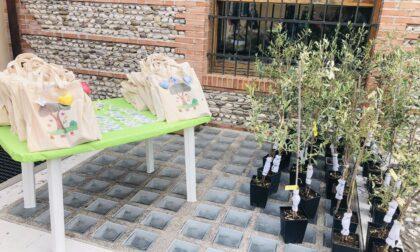 Una pianta d'olivo per ogni nuovo nato di Altivole
