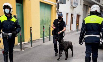 Controlli antidroga, il cane Luke setaccia via Roma e vicolo Orioli