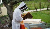 Le api trovano casa tra i filari dei vigneti, connubio naturale tra vino e miele