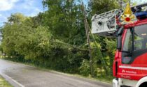 Albero precipita sui fili dell'Enel: paura a San Biagio di Callalta