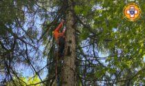 Precipita col parapendio e chiama i soccorsi dall'albero: salvato